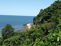 Bingil Bay jungle on the waterfront Mission Beach